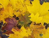 Tło z liści jesienią — Zdjęcie stockowe