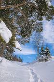 Bir dağ orman içinde taze kar kış manzara — Stok fotoğraf