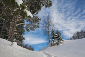 Winter landscape with snow-covered fir trees — Stock Photo