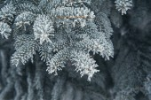 Christmas background of snow-covered trees — Stok fotoğraf