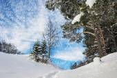 Forest landscape in winter, it snows — Stock Photo