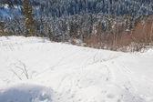 Paisaje de invierno hermosa con la nieve cubrió los árboles — Foto de Stock