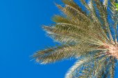 Palm tree against the sky in summer — Stock Photo
