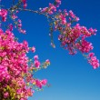 Blooming tree with red flowers on blue sky background — Stock Photo #67373015