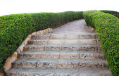 Track walks and stone steps leading down — Foto de Stock