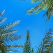 Palm leaves against the blue sky — Stock Photo #70074093