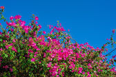 Beautiful flowering shrubs against the blue sky — Stock Photo
