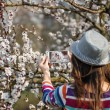Woman in a hat makes a photos on smartphone flowering tree branc — Stock Photo #70400117
