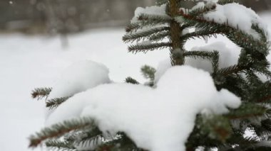 Beautiful fir-tree in snow in winter and falling snow — Stockvideo