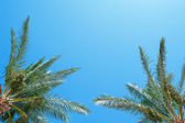 Palm frond against blue sky — Stock Photo