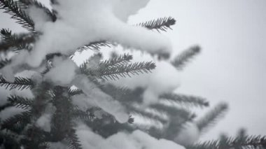 Arbre d'hiver enneigé dans un parc — Vidéo