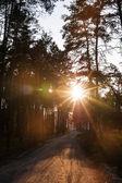 Ormandaki ağaçlar arasında güneş ışınları pour — Stok fotoğraf