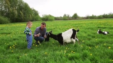 Little boy with dad feeding the goat — Stock Video