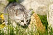 Little fluffy kitten sits on a rock — 图库照片
