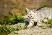 Gray kitten on a gray sand in the grass — Stock Photo