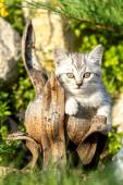 Small sand-colored kitten on green grass — Stock Photo