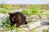 Black cat sitting on gray sand — Stock Photo