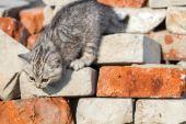 Kitten climbs bricks — Stock Photo