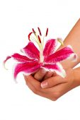 Pink flower in hand on white background — Stock Photo