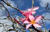 Hawaiian Lei flower — Stock Photo