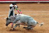 Bull-fight in Plaza de Toros - Mexico City — Stock Photo