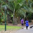 Постер, плакат: Brisbane City Botanic Gardens