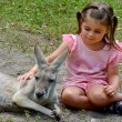Little girl petting an Eastern grey kangaroo — Stock Photo #58183461