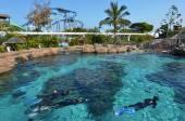 Shark Bay in Sea World Gold Coast Queensland Australia — Stock Photo