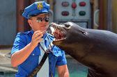 Australian sea lion — Stock Photo