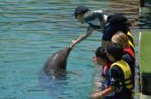 People interact with Dolphin — Stock Photo