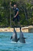 Dolphin show in Sea World Gold Coast Australia — Stock Photo