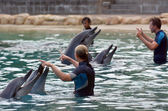 Instructor interact with Dolphin — Stock Photo