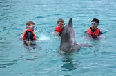 Family interact with Dolphin — Stock Photo