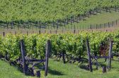 New Zealand wine — Stock Photo