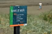 Dune restoration Muriwai beach New Zealand — Stock Photo
