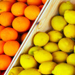 Citrus of Oranges and lemons — Stock Photo #73628973
