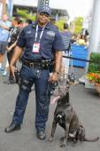 NYPD transit bureau K-9 police officer and Belgian Shepherd K-9 Sam  providing security at National Tennis Center during US Open 2014 — Stock Photo