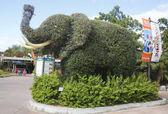 Wejście do San Diego Zoo słoń topiary — Zdjęcie stockowe