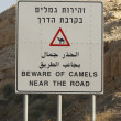 Beware of Camels near the road sign — Stock Photo #59935787