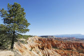 Tree and rock formations in Bryce Canyon National Park, Utah — Stock Photo