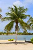 Palm tree and kayak at the Caribbean beach — Stock Photo