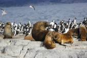 Těsnění v Antarktidě — Stock fotografie