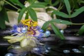 水疗概念的西番莲花、 绿枝、 毛巾和珍珠 — 图库照片