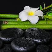 Spa concept of zen basalt stones, white flower plumeria and natu — Stock Photo