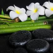 Spa concept of zen basalt stones,  white flower frangipani and n — Stock Photo