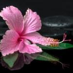 Spa concept of pink hibiscus flower on green leaf, zen basalt st — Stock Photo #54231315