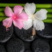 Spa concept of zen basalt stones, white, pink hibiscus flower an — Stock Photo