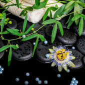 Spa concept of passiflora flower, green  branches, towels, zen b — Stockfoto