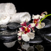 Spa concept of orchid Cambria flower with drops and white towels — Stockfoto