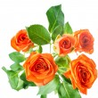 Orange rose bush flowers is isolated over white, closeup — Stockfoto #58899037